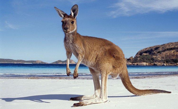 جزيرة كانغارو في أستراليا