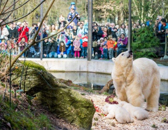 الزوار في حديقة حيوانات هيلابرون