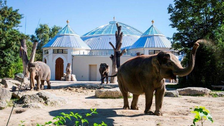 الفيلة في حديقة حيوانات هيلابرون