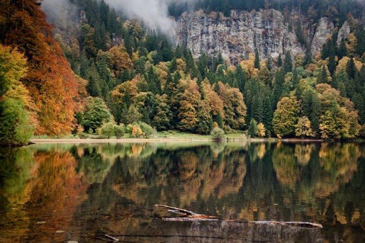 الغابة السوداء في ألمانيا