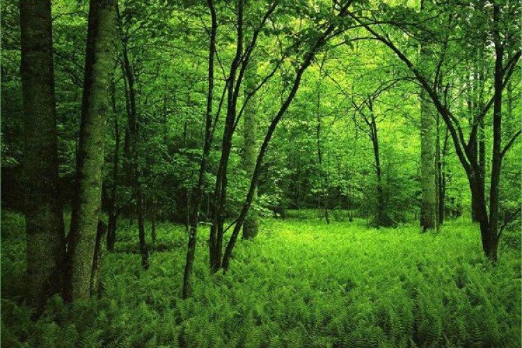 الاشجار والظلال الكثيفة في الغابة