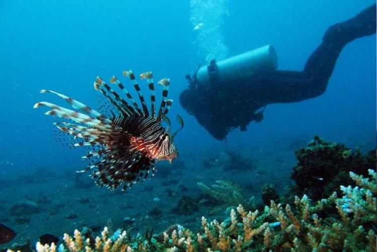 ممارسة الرياضات المائية في جزيرة بوناكين في إندونيسيا