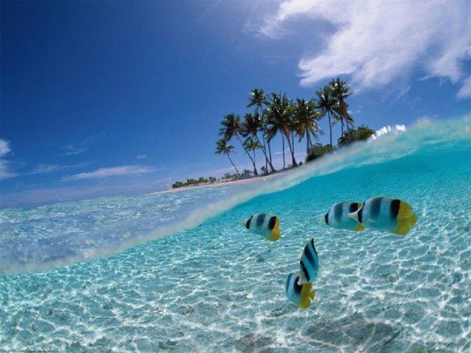 الاسماك تحت مياه جزيرة بوناكين في إندونيسيا