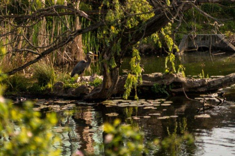 حديقة حيوان طشقند أكبر حديقة حيوان في منطقة اسيا الوسطى