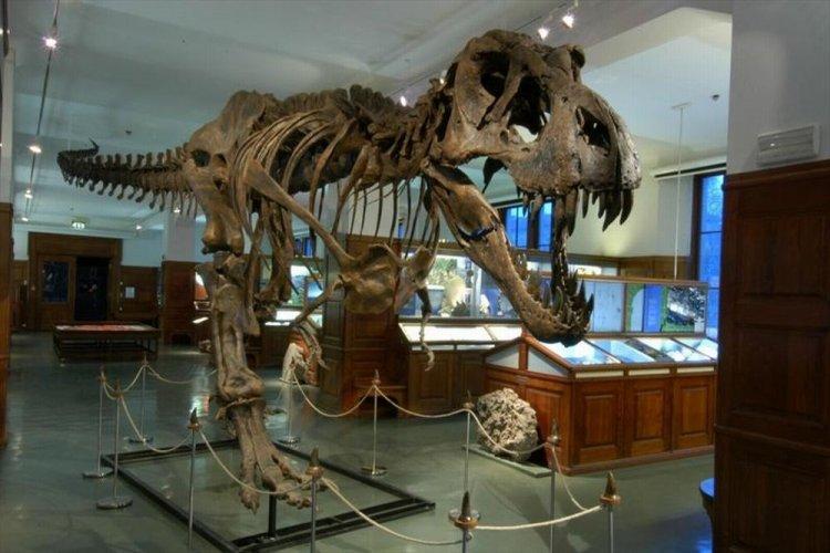 من داخل متحف التاريخ الطبيعيفي أوسلو