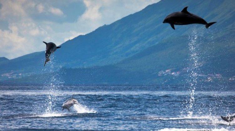 رحلات بحرية لمشاهدة الحيتان والدلافين في جزر الكناري