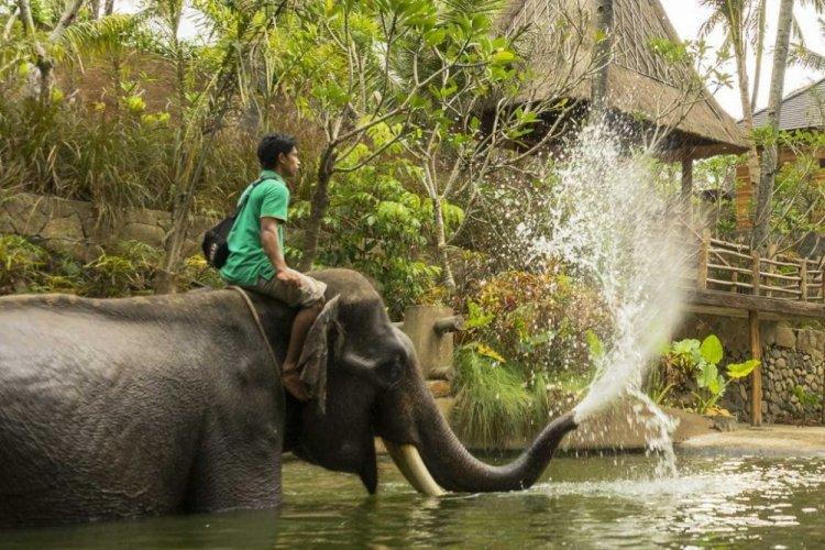 الاستمتاع مع الفيلة