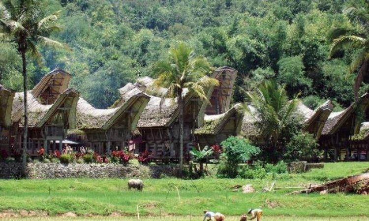 المنازل فى مدينة تانا تاورجا