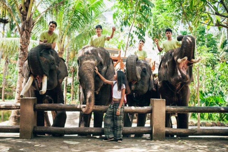 حديقة الفيلة لومبوك