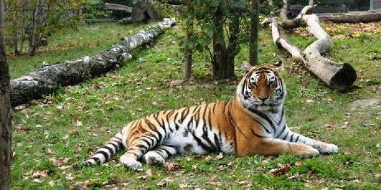 حديقة حيوانات سفاري فاسانو لانديا
