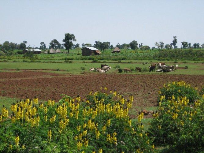 الحقول حول بحيرة تانا