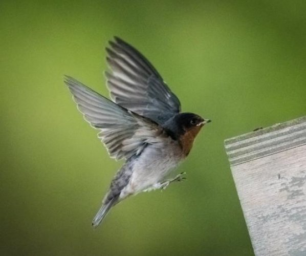 جزيرة الطيور محمية طبيعية نادرة بها أجمل المخلوقات