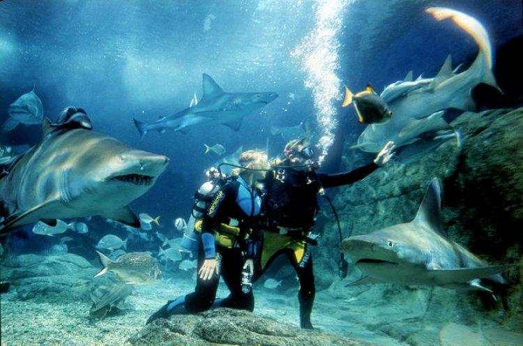 الغوص مع أحد المدربين في حوض أسماك القرش الضخمة في اكواريوم ملبورن