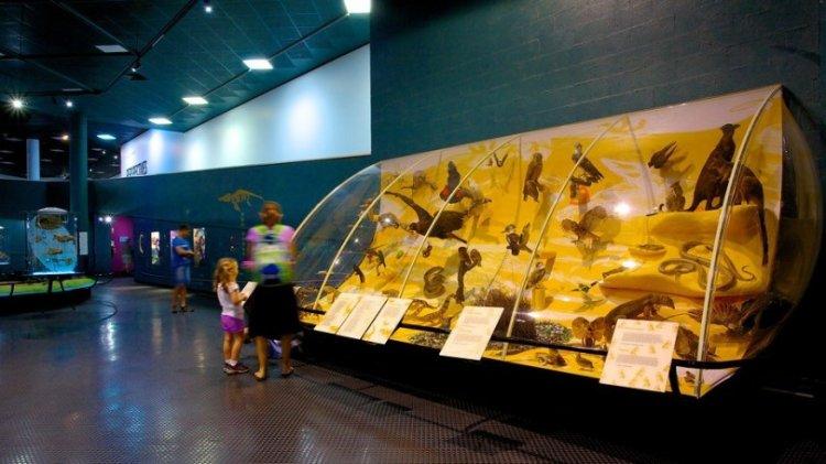 متحف و معرض أند للفنون في أستراليا