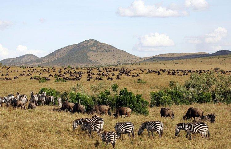 حيوانات برية في محمية ماساي مارا