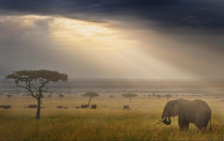 فيل بري في محمية ماساي مارا
