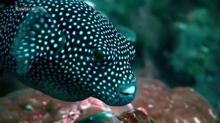 الكائنات البحرية الخلابة في ارخبيل غالاباغوس