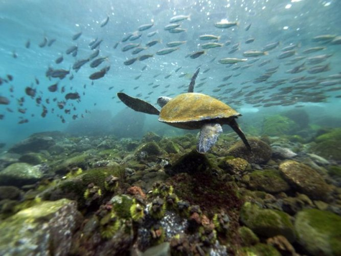 محموعة من الحيوانات البحرية الفريدة في جزر غالاباغوس