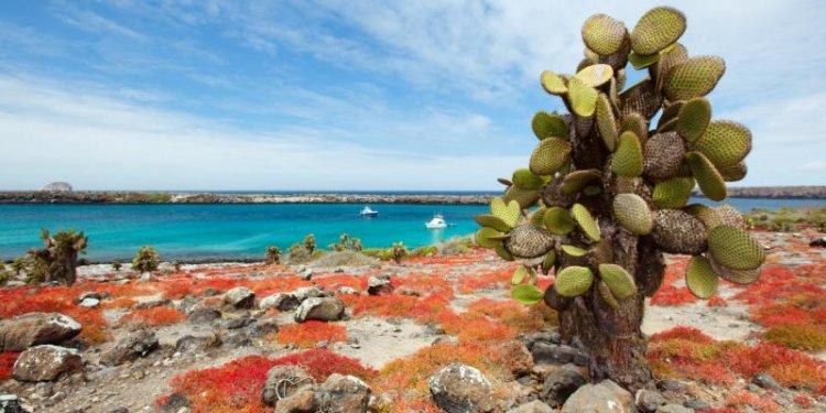 المناظر الطبيعية الفريدة من الجبال البركانية مع التكوينات الصخرية في جزر غالاباغوس