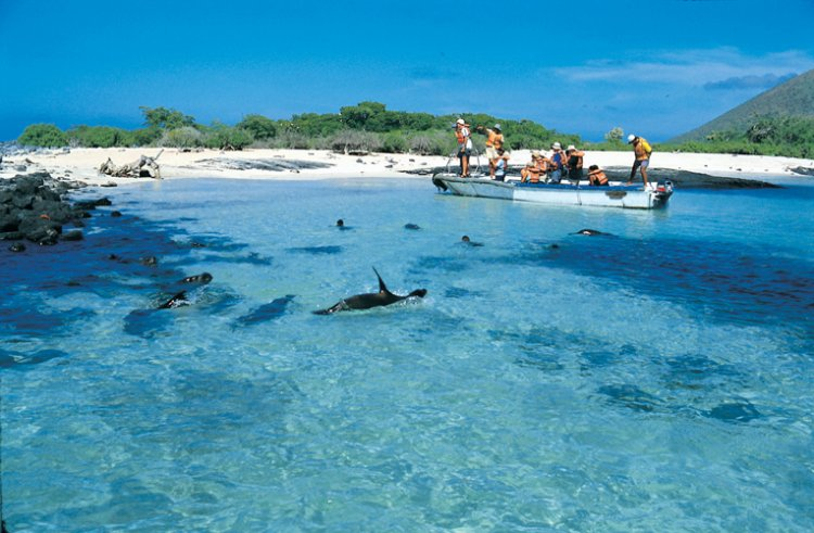 الحياة البحرية في ارخبيل غالاباغوس