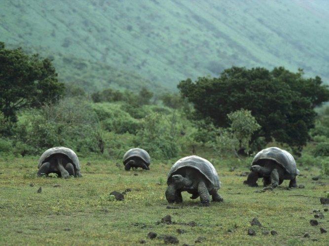 الحياة البرية في ارخبيل غالاباغوس حيث السلاحف البرية الكبيرة النادرة