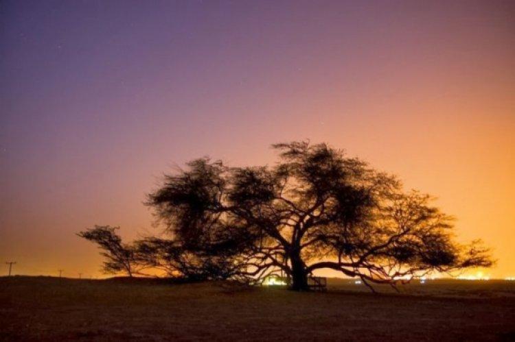 شجرة الحياة، وقت الغروب