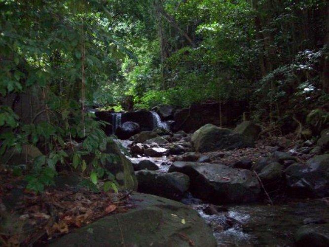 الغابات المطرة احد المعالم الطبيعية في سانت كيتس ونيفيس