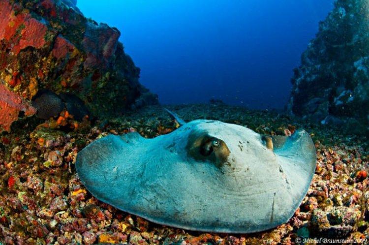 الحياة البحرية في جزيرة فرناندو دى نورونا في البرازيل