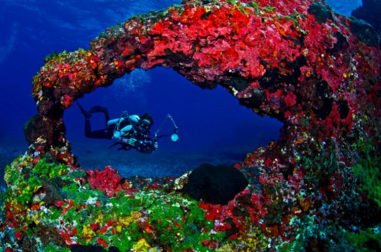الحياة البحرية جزيرة فرناندو دى نورونا