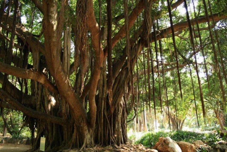 أشجار حديقة التجارب الحامة