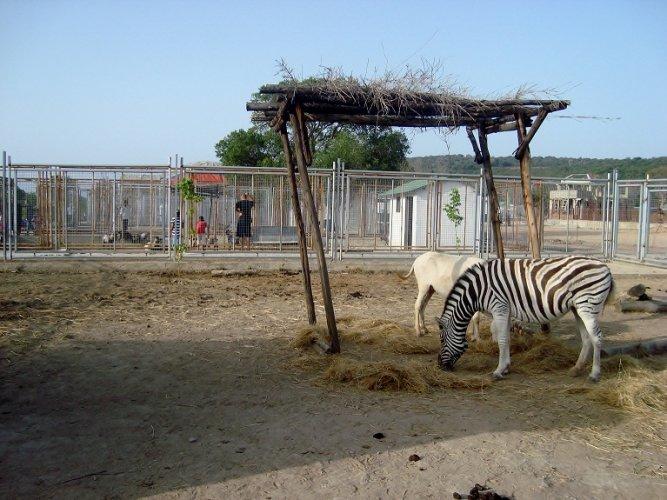 حديقة الحيوانات والتسلية الجزائر