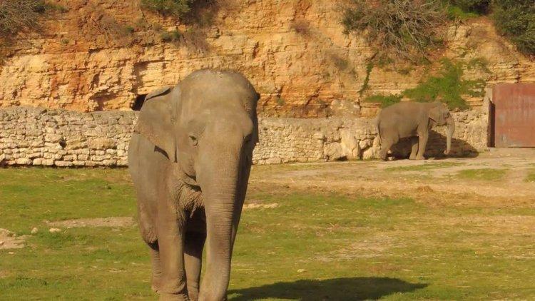 الفيل في حديقة الحيوانات والتسلية الجزائر