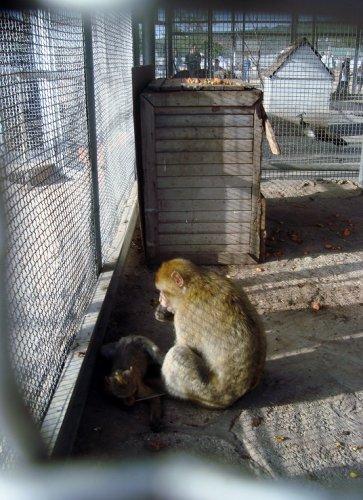 القرد في حديقة الحيوانات والتسلية بن عكنون