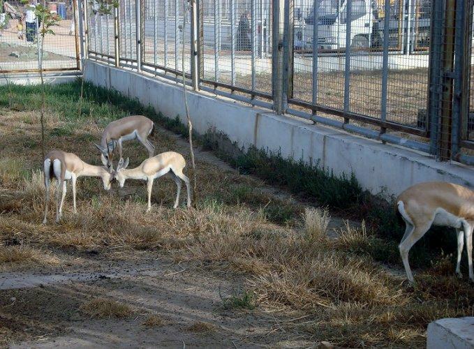 حديقة الحيوانات والتسلية بن عكنون