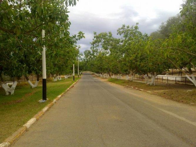 شوارع حديقة الحيوانات والتسلية