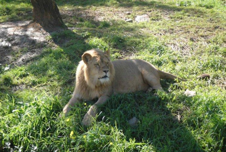 حديقة الحيوانات والتسلية