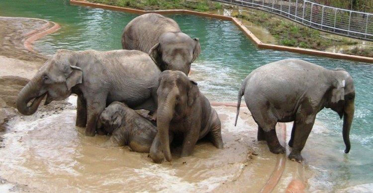 حديقة حيوانات كوبنهاجن