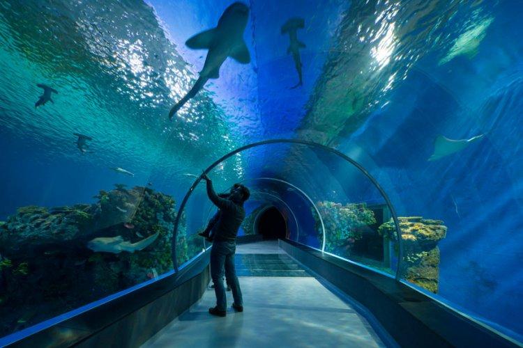 حوض الأسماك الوطني الدنماركي