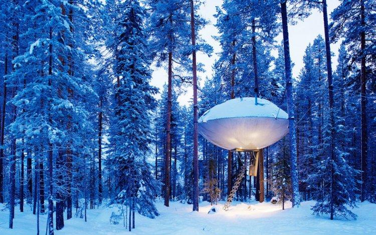 فندق الأشجار في الشتاء