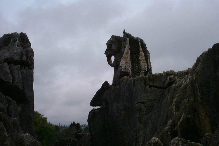 احجار تشكلت علي هيئة حيوانات صغرية في غابة الاحجار