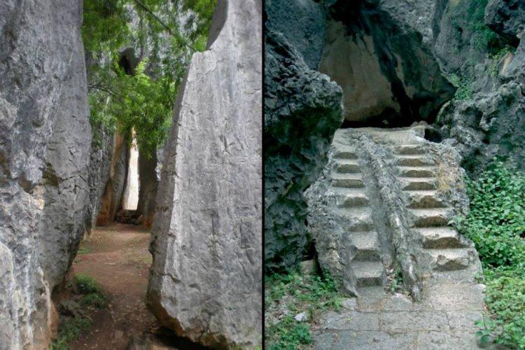 ممرات داخل غابة الاحجار