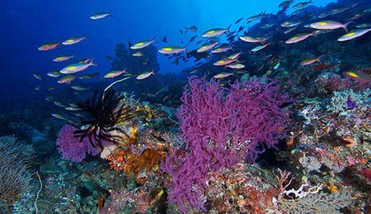 الشعاب الرجانية والاسماك النادرة في جزيرة بالاوان