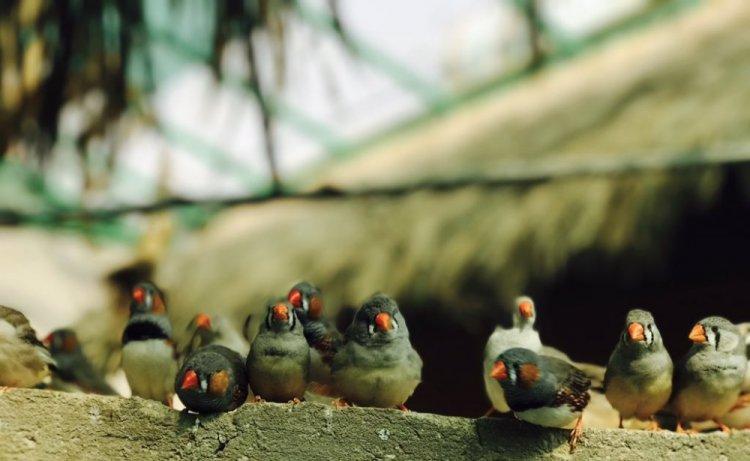محمية جاردن تلنتس للطيور Garden Talents Reserve For Birds في بريدة