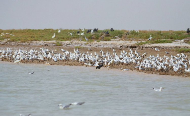 الطيور المهاجرة على شواطئ بوبيان