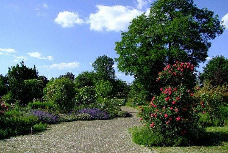 حديقة دوسلدورف النباتية