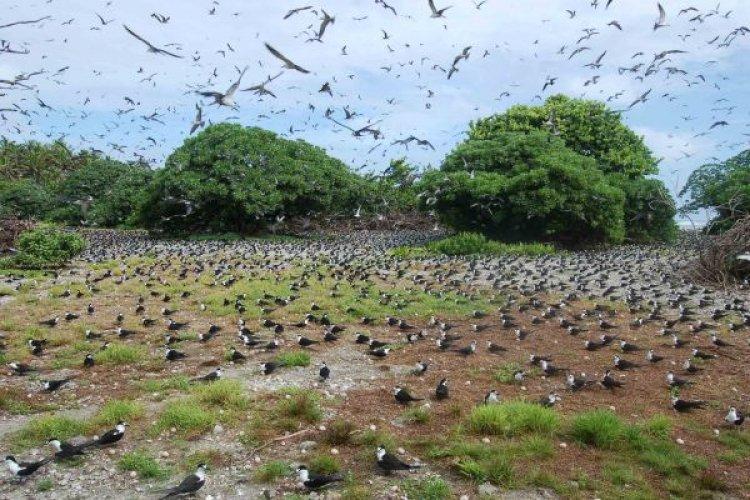 جزر بالميرا موطن الطيور النادرة