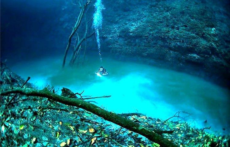 الأشجار في نهر سينوتى انجيليتا