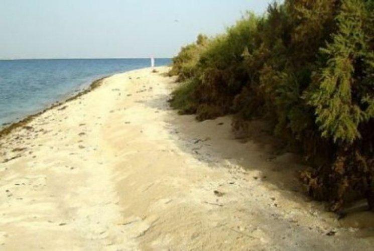 محمية جزر أم القماري بالسعودية سائح