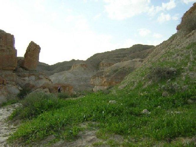 وادي العجمان بالسعودية
