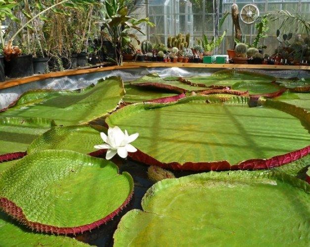 حديقة جامعة دورهام النباتية في مدينةدورهام بالمملكة المتحدة